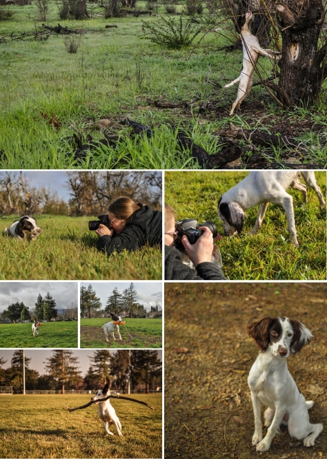 mom-photographer-springer-spaniel
