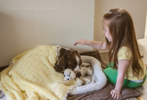 springer-spaniel-playing-with-kids